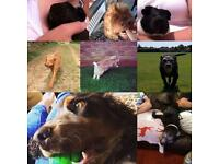 Pet sitting/ sitter dog walking / walker, pop ins and doggy day care services
