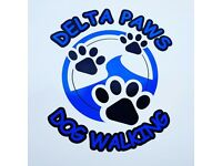 Dog walker Delta Paws Professional dog walking service fully insured and dbs checked