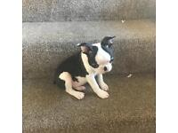 Boston terrier puppies ready now REDUCED