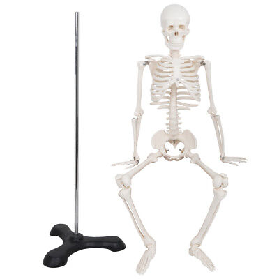 Mini Size Medical Anatomical Human Skeleton Model With Rolling Stand 85cm33.5