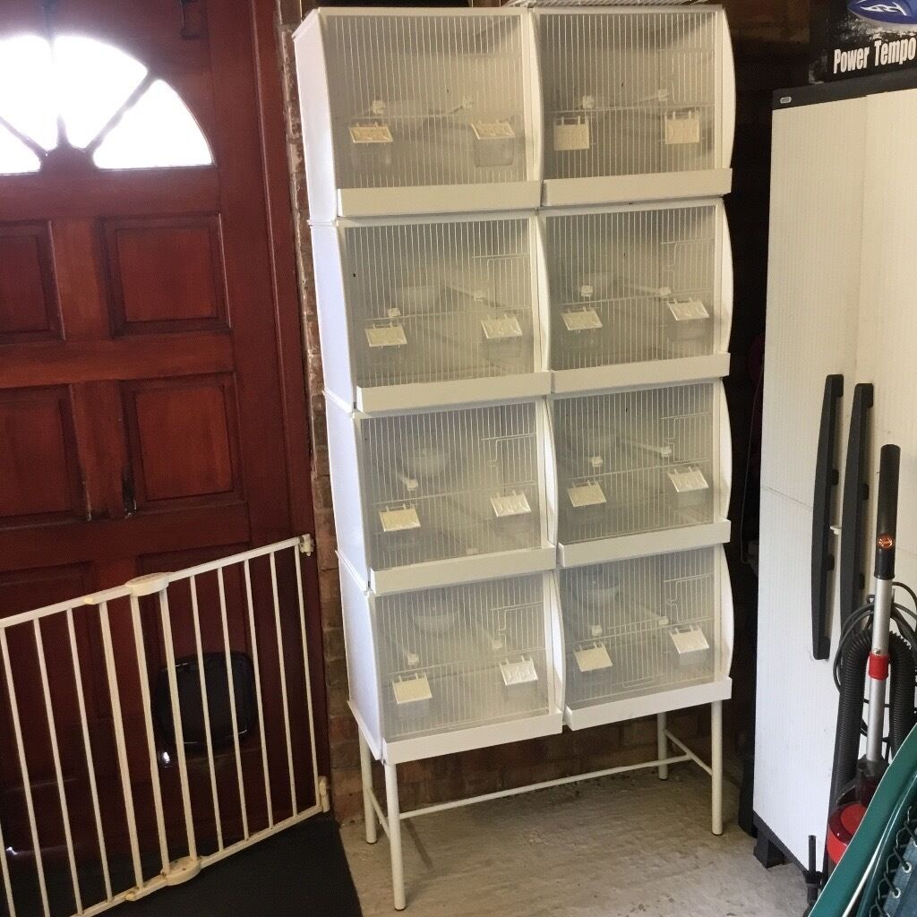 Canary Small Bird Breeding Cages Set Up In Oxford