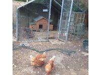 Metal framed garden house, chicken coop or fruit housing