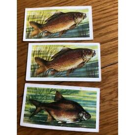 Brook Bond Tea Fresh Water Fish