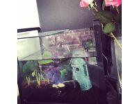 Fishes, tank and accessories ONLY £20