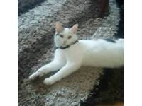 Pretty cat for sale (reserved)