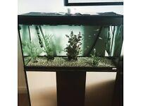 Freshwater Tropical Aquarium