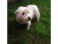 Scottie Dawg, Dog Walking in all areas and pet services including framed photographs