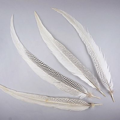 Natural SILVER PHEASANT Tail Feathers 4-30