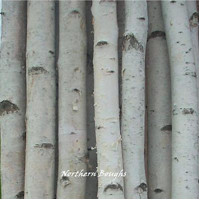 4 Thick White Birch Poles 8'
