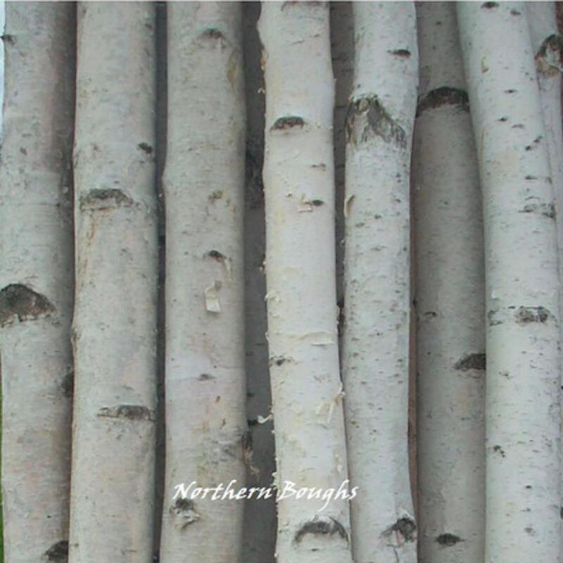 4 Thick White Birch Poles 4