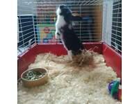 rabbit indoor cage large