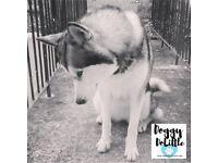 Doggy Dolittle Professional Dog Walking Service. Dog Walker.