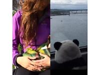 Missing panda and jacket from the train