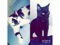 2 cats (urgent home needed)