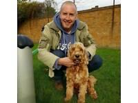 Flexible dog walker, puppy visits, pet sitter, Whitton, Twickenham and surrounding areas