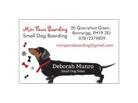 Mini Paws Boarding - Small dog boarding