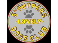 Sergeant Puppers Lovely Dogs Club - Dog Walker/ Dog Walking and Pet Services East Lothian
