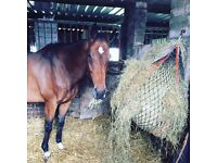 Horse for loan