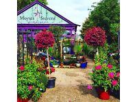 Gardener - London NW11 and surrounding area