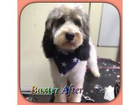 £5 off New clients, Professional Dog Groomer, Galleywood Common, 1-2-1 basis, Calm Surroundings