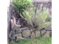 Stones various sizes and shapes ideal Garden