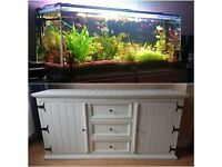 5 half foot fish tank