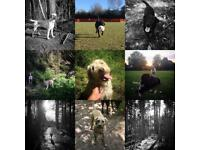 In Their Element - Tunbridge Wells Dog Walker / Dog Walking Services