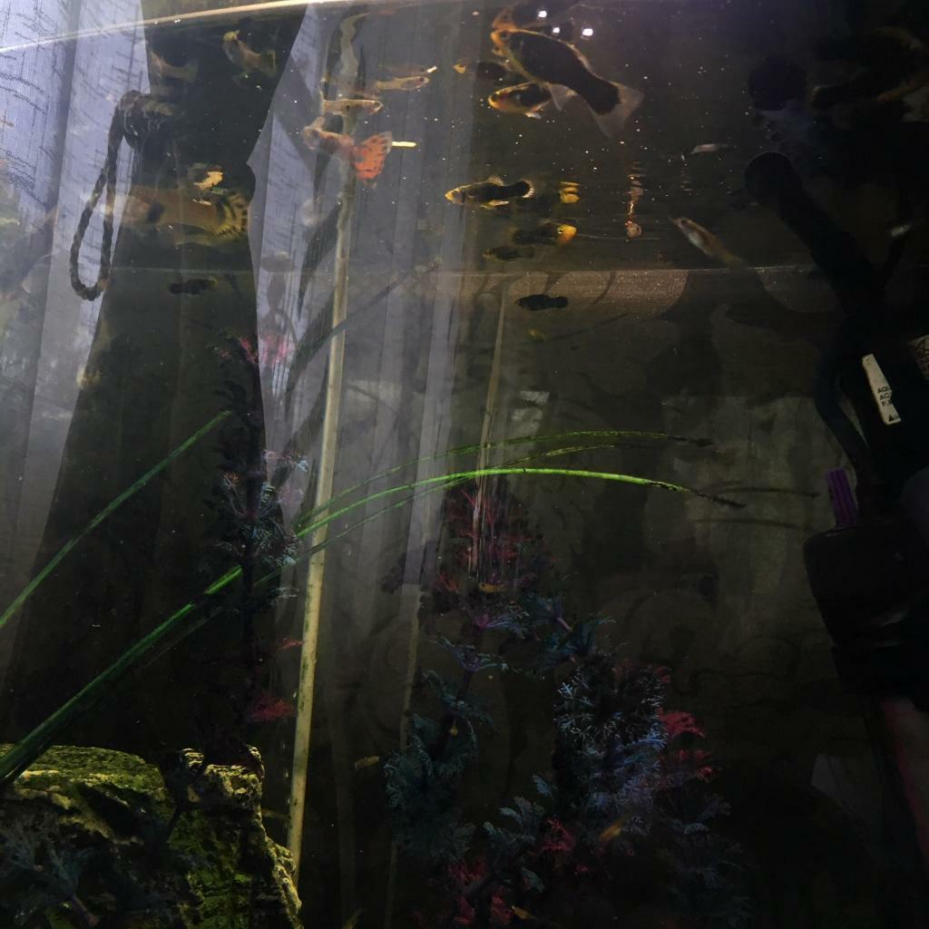 Fish tank with 30-40 fish and 15cm cleaner