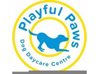 Playful Paws Dog Daycare the only fully licensed and insured luxury dog day care centre in Inverness
