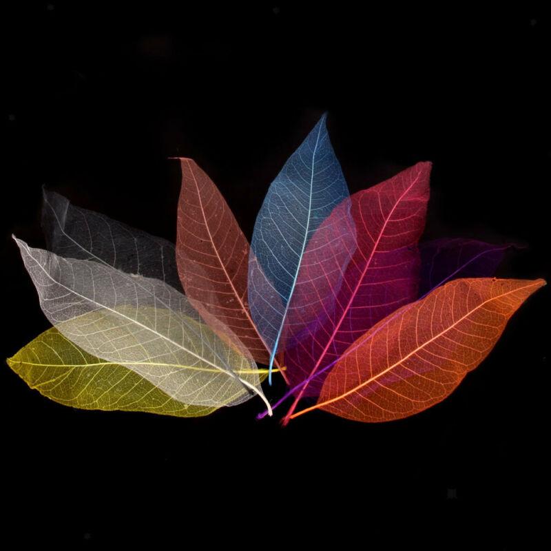 150pcs Natural Magnolia Skeleton Leaves Scrapbooking Mixed Color Decor Gifts