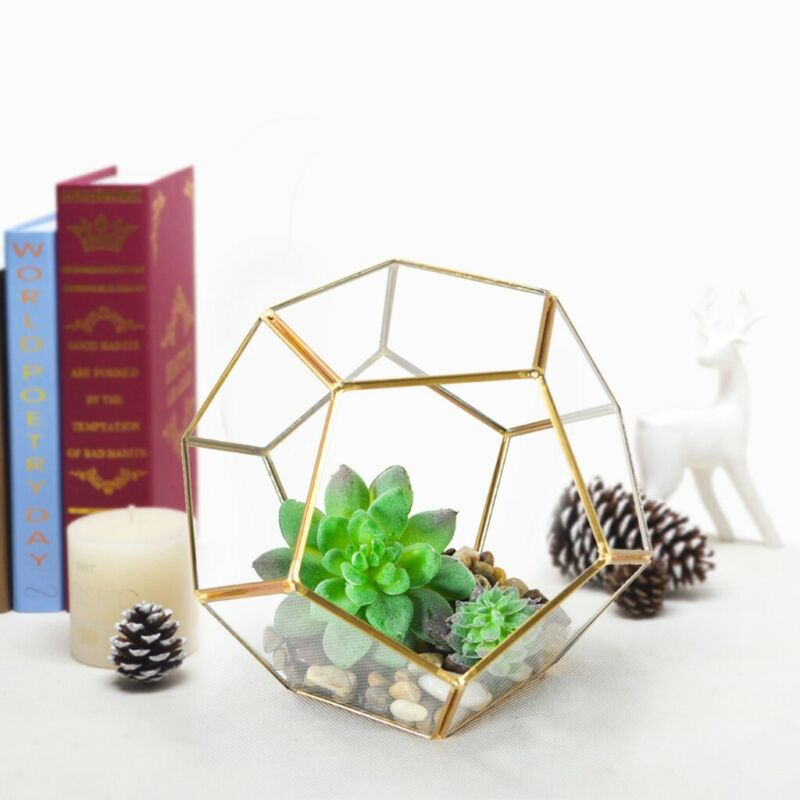 "7x7x6"" Clear Glass Geometric Terrarium Box Tabletop Succulen"