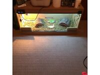 3ft reptile vivarium was used to house tortoise comes with basking bulb and UVB bulb fittings WGC