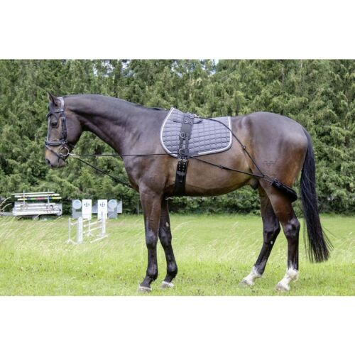 HKM Lunging Training Aid  for Strength Building of the Hindquarter