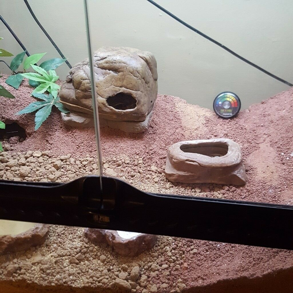 Vivarium And Leopard Gecko Full Set Up