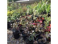 UPDATED - Perrenial plants