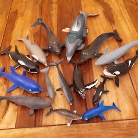 whales and dolphins models