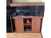 juwel rio 240 tropical aquarium with Beech Stand