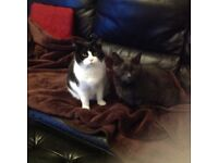 2 Adult cats need loving new home