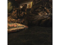 2 lovely cats need a new home