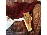 MISSING ginger cat from erdington area