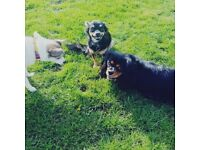 Professional Dog Walker and Pet Sitter in RM8 Becontree