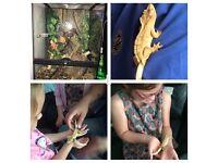 Complete Crested Gecko Vivarium