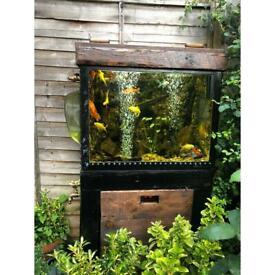 Goldfish ( North Finchley) N12 0BD