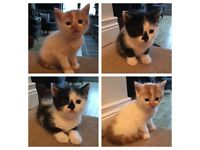 Two super cute kittens ready for there forever homes
