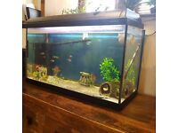 Fish Tank with stand and Tropical fish