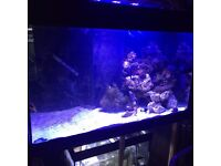 MARINE FISH TANK FULL SET UP READY TO GO