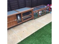 Male rabbit with hutch and run