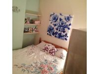 4 Bed Golden Triangle Student property with all bills included. Lovely redecorated house,big garden