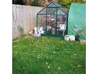 Greenhouse.