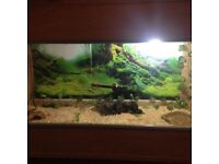 3ft vivarium with full set up